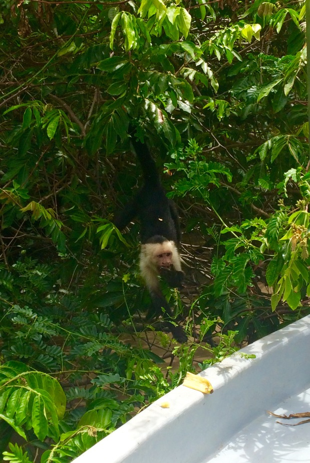 Where the Wild Things Are: The Creatures of Costa Rica